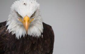 واقعیاتی جالب درباره زندگی انواع عقاب ها