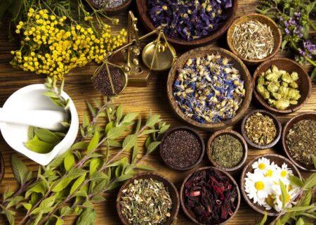 ۶ گیاهی که تأییدیه علمی دارند؛ از بابونه تا نعنا فلفلی