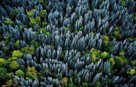 جنگل چاقوها/یکی از عجیب ترین جنگل های دنیا