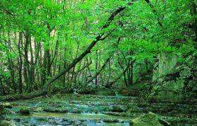 جنگلهای زیبای گلستان